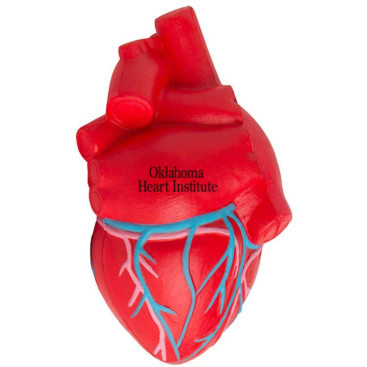 Anatomic Heart with Veins Stress Reliever #2